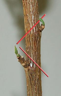 pruningnodes