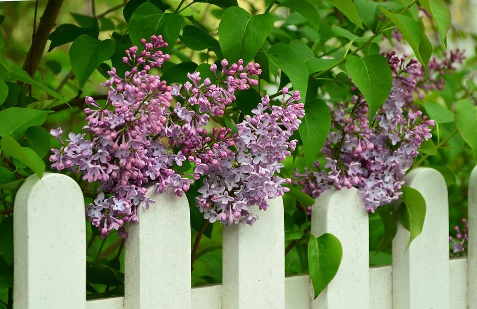 Easy Garden Improvements