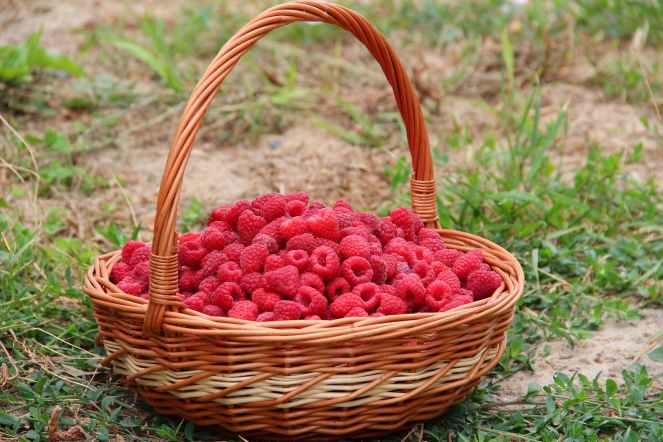 rasberriesbasket