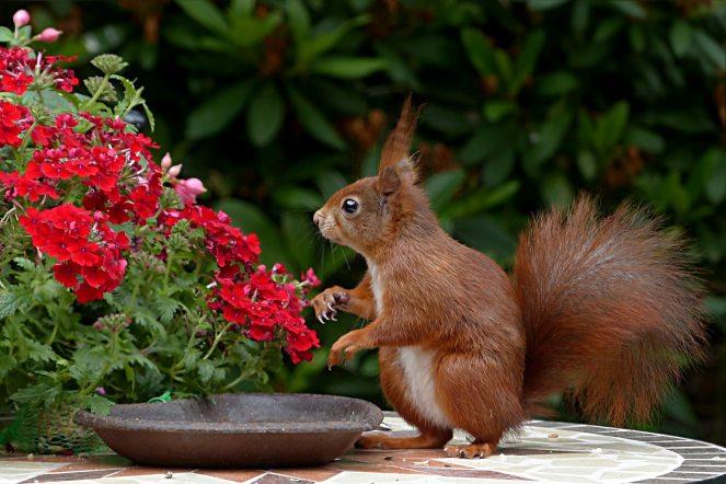 animal-animal-photography-blur-460775
