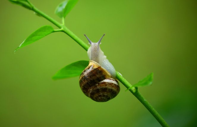 animal-gastropod-leaves-108141