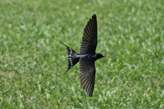 birdlawn