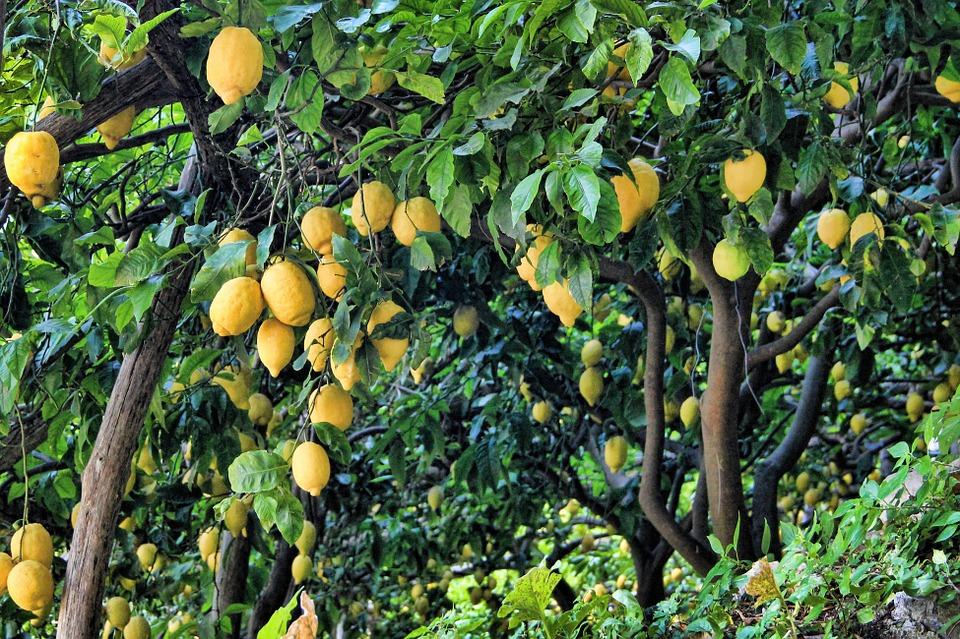 lemon-852244_960_720