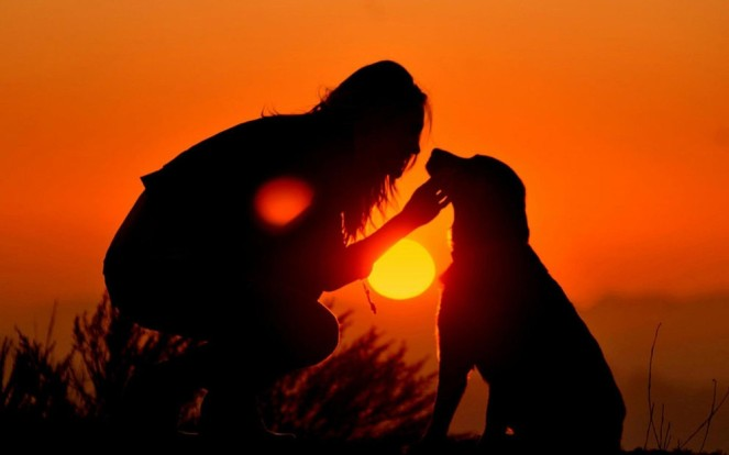 dog-with-person-in-sunset-love1