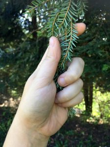 handtouchingtree