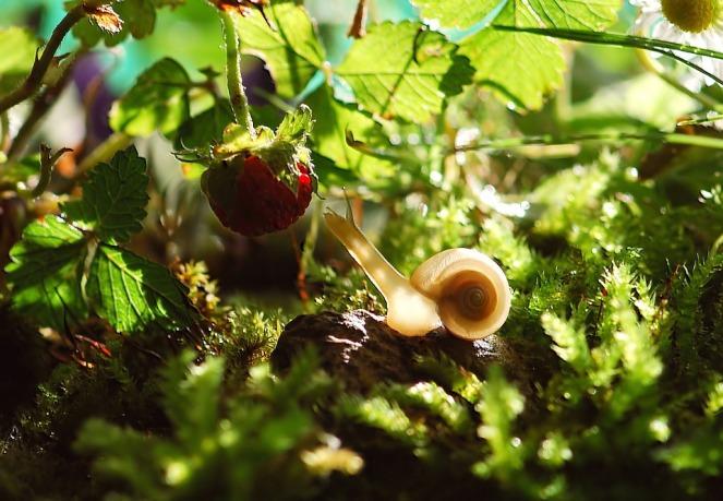 snail-582194_960_720