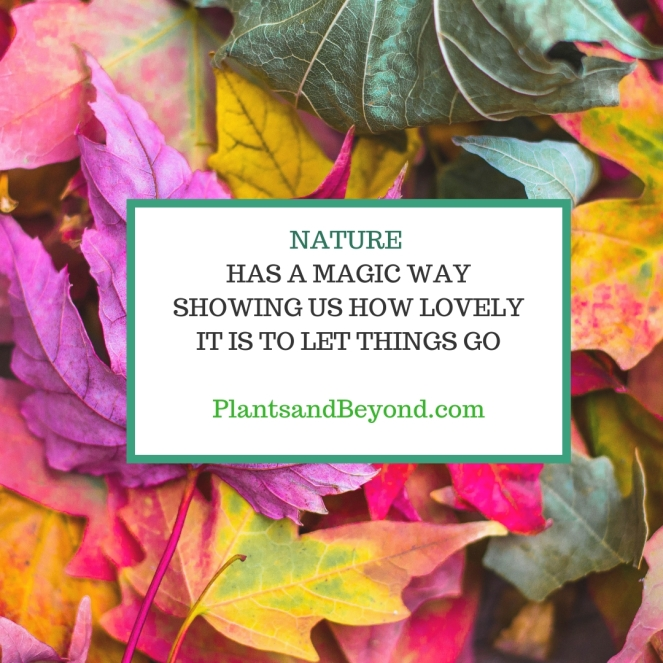 Colorful Leaves Quote Fall Instagram Post.jpg