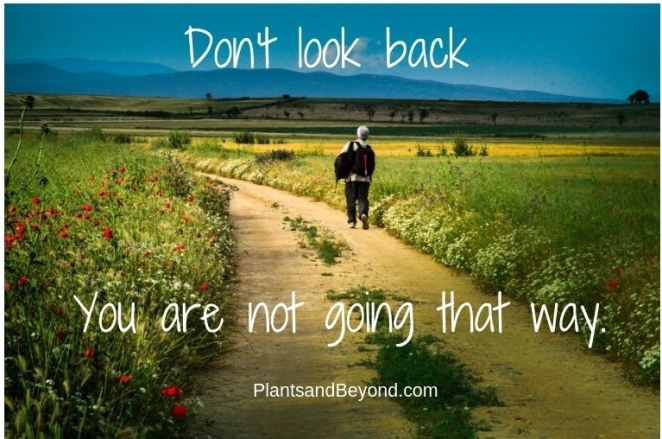 Don't Look Back (1)