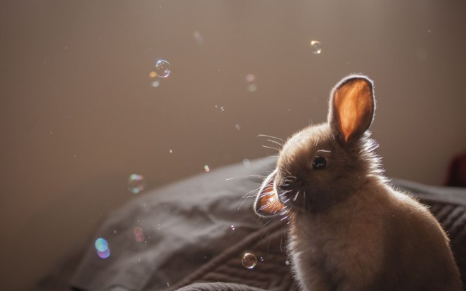 adorable-soap-bubbles-wallpaper-1