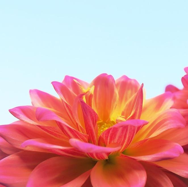 flower-3297730_960_720
