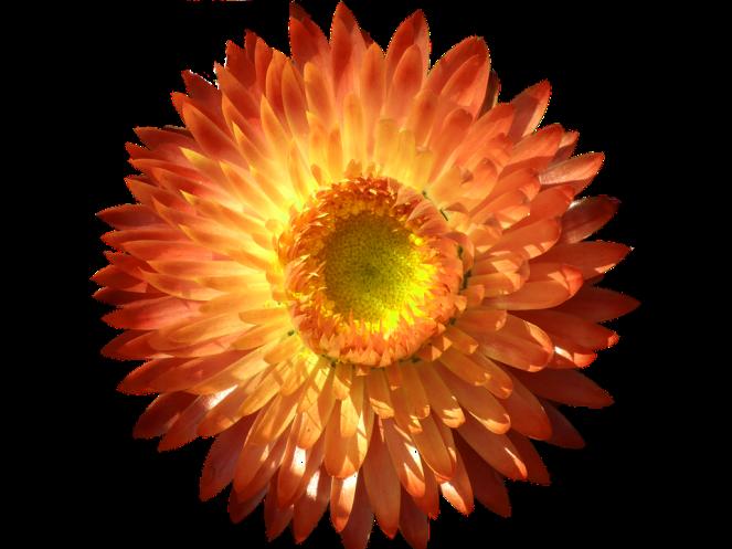 flowerkindness.png