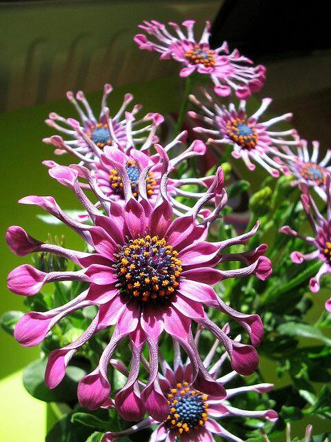 flowersunusual.jpg