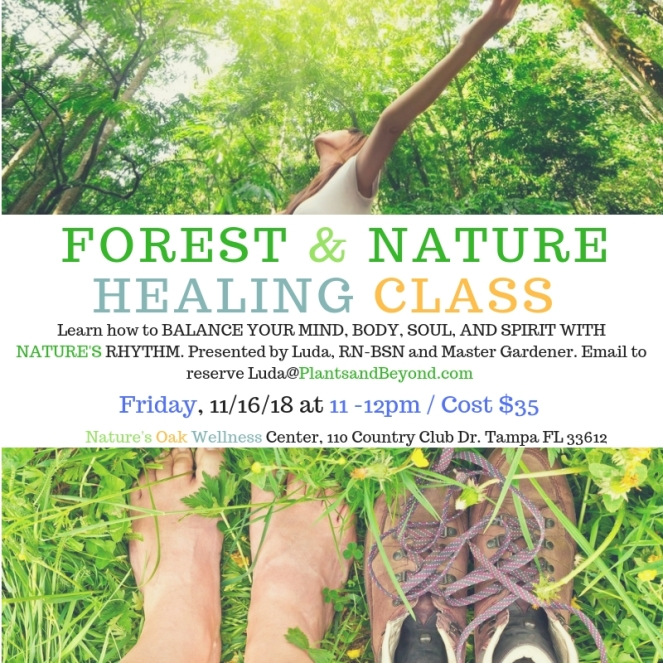 Forest and Nature Healing Class (2)