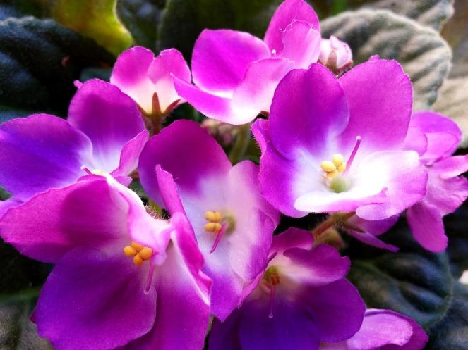 blossom-3702068_960_720