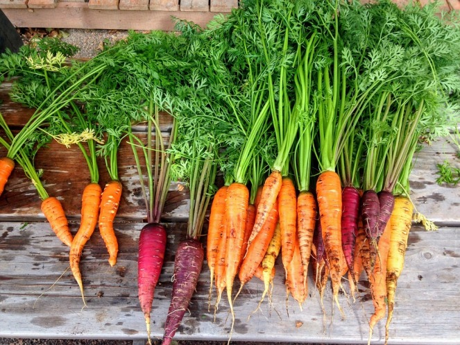Vegetable Fresh Produce Carrot Food Carrots