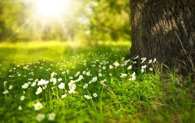 earthingflowers