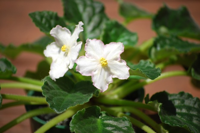 flower-1084189_960_720