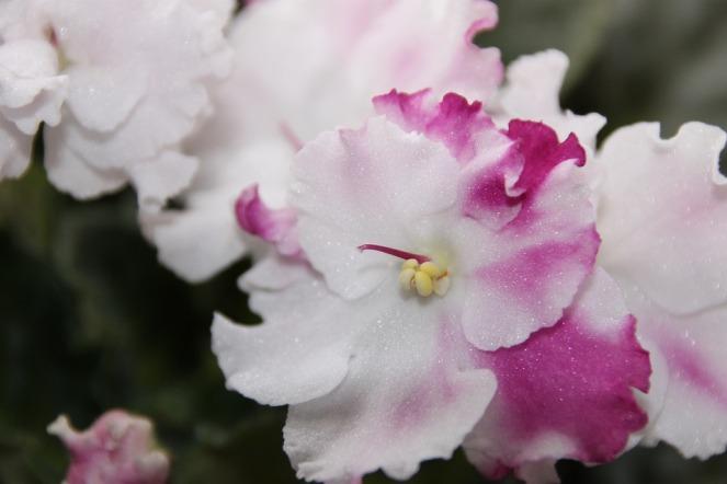 flower-2686763_960_720