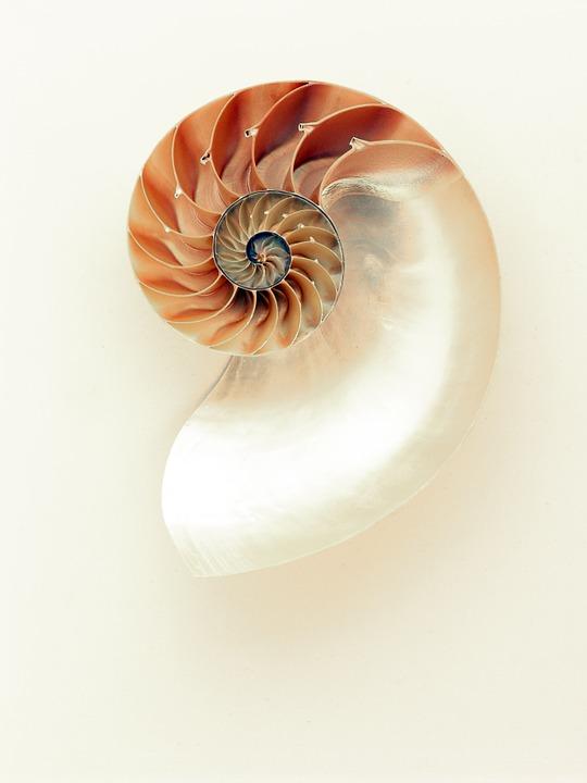 nautilus shell fabinocci