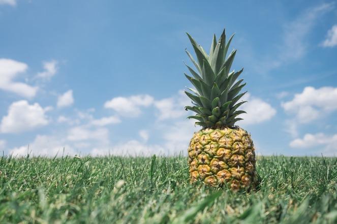 pineapple-fibonacci