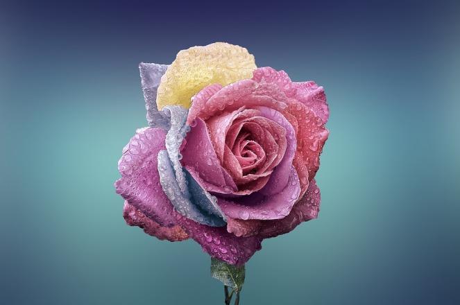 rose-fibonacci