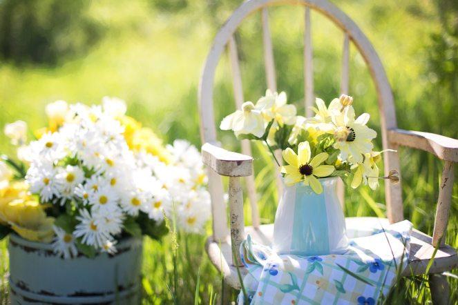 daisies-flowers-garden-35847
