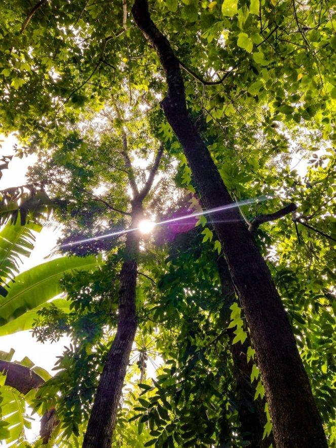 treesunlight1