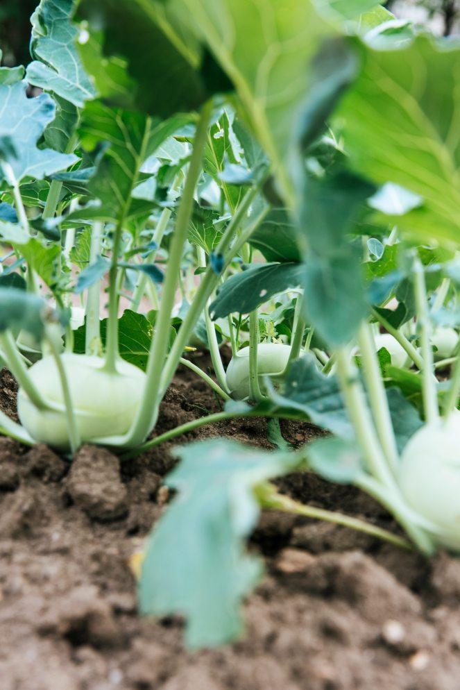 close-up-farm-food-121629.jpg