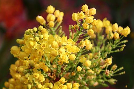 flowers-4166867__340
