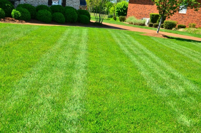 lawn-care-643563_960_720